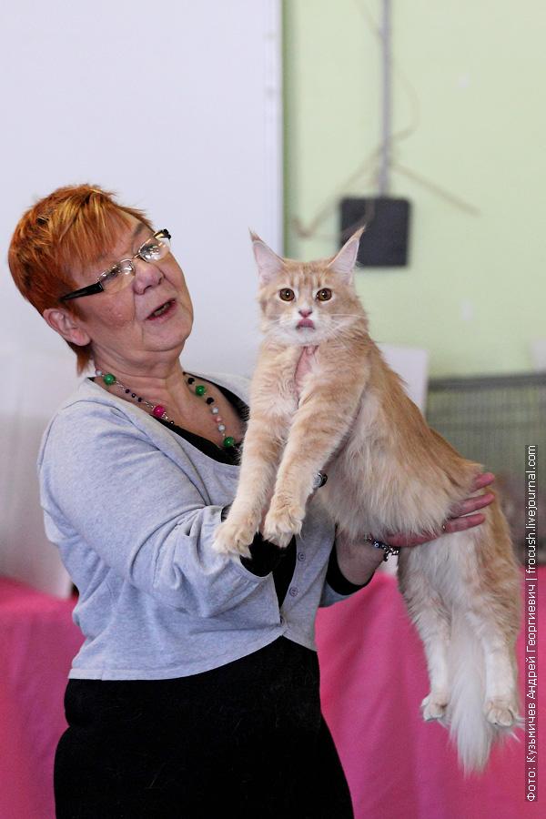Мейн-кун Кошка выставка Москва