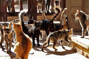Обитатели кошачьего монастыря - 2