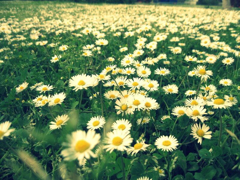 цветы в апреле в Будве