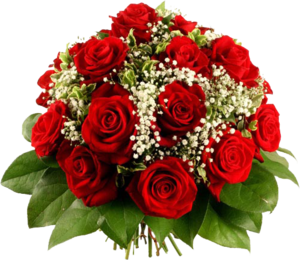 Красные розы на прозрачном фоне