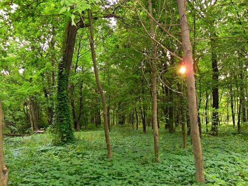 Пейзажная часть парка