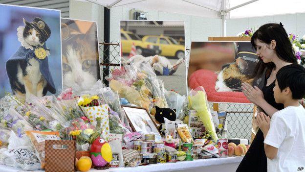 В Японии похоронили кошку Таму