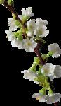 Holliewood_NatureJournal_Flower1.png