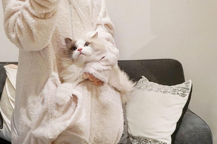 Лучший подарок владельцу котика на Новый год!