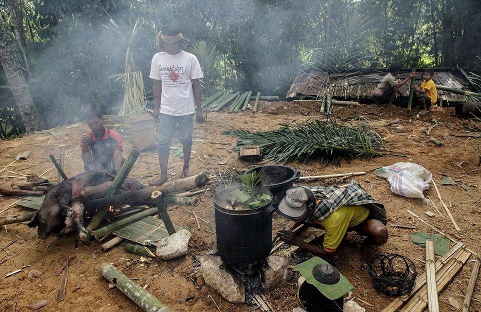Тораджийские мужчины готовят кабана традиционным способом на бамбуковых палках перед фестивалем Мане