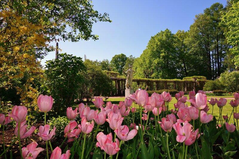 Танцовщица у розовых тюльпанов