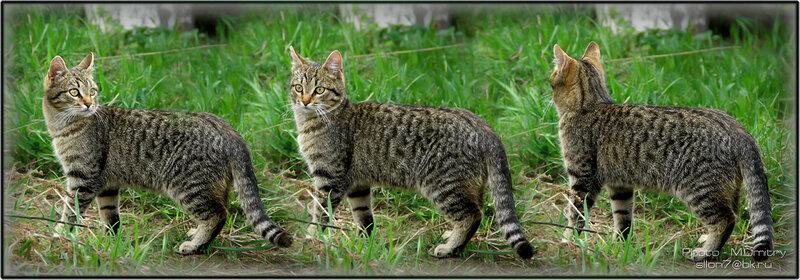 Коты & кошки (2011)