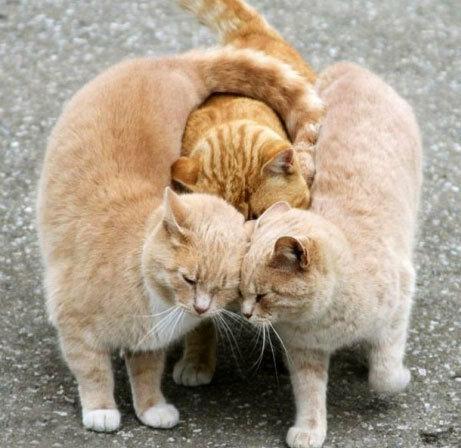 Просто забавные коты..