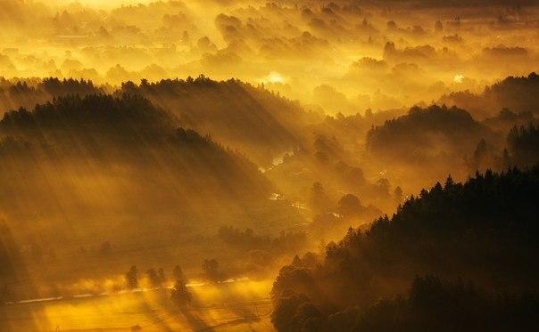 sunforest.jpg