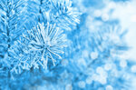 Winter (4).jpg