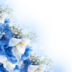 Spring white and blue flowers (1).jpg