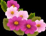 цветы-(271).png