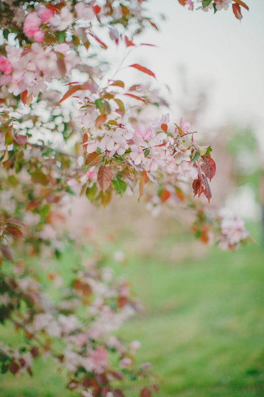 цветение в москве