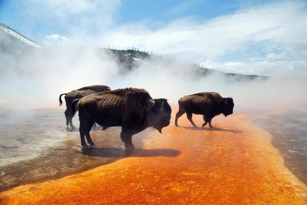W o r l d: yellowstone national park