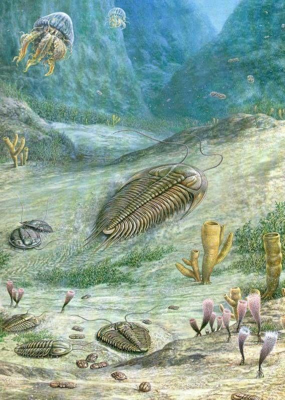 обитатели древнего моря.jpg