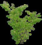 зелень.png