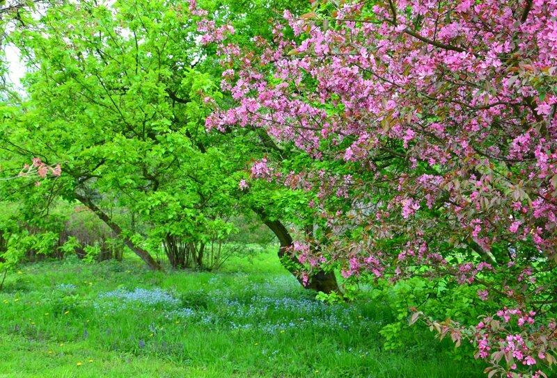 В весеннем саду грез...