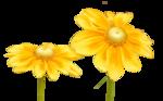 tubeclaudiaviza-flores161.png