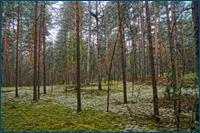 http://img-fotki.yandex.ru/get/9801/15842935.18d/0_d5e27_d4029362_orig.jpg