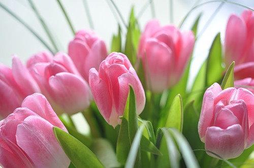 цветы 9 мая