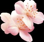 NLD Flower c.png