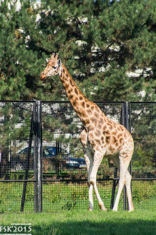 warshaw_zoo-49.jpg