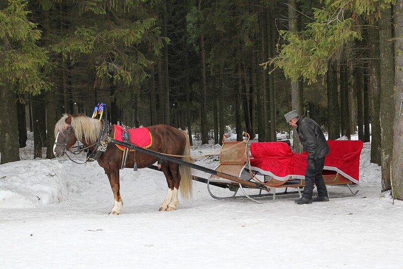 Запряженный в сани конь игреневой масти в Порошинском лесу