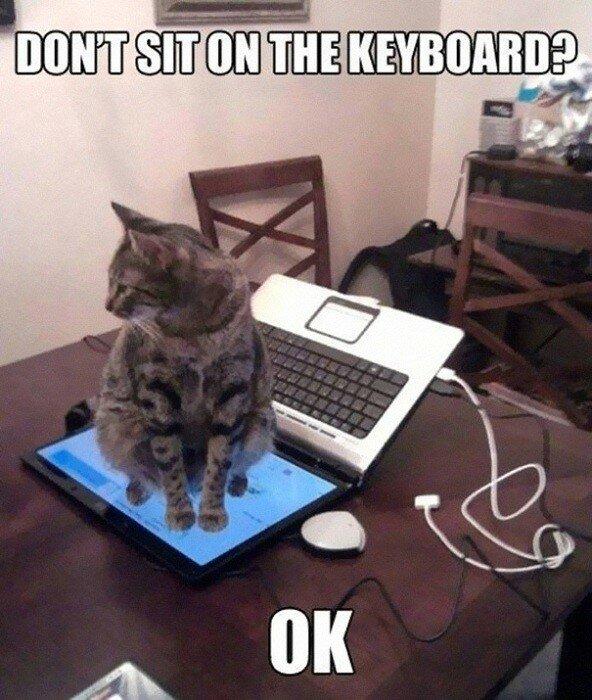 Кот уселся на экран ноутбука.