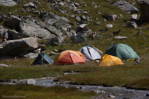 где палатки, там и козы