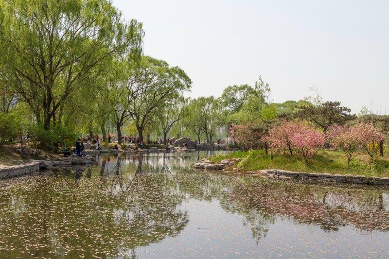 Парк Юйюаньтань, Пекин, сакура