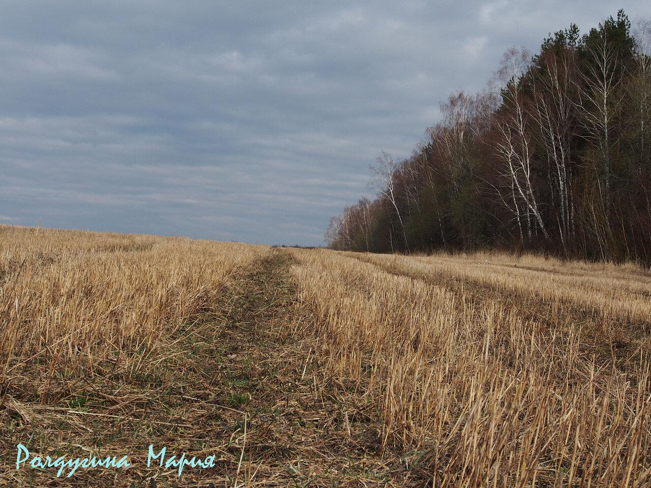 Ясногорский район весной