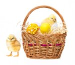 easter eggs in a basket and chickens