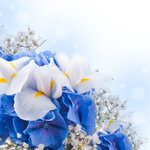 Spring white and blue flowers (3).jpg