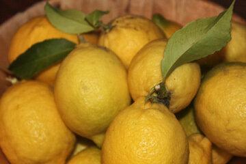 Лимоны для десерта