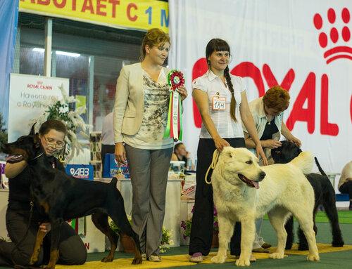 http://img-fotki.yandex.ru/get/9802/1773011.37/0_a8983_dc6cb023_L.jpg