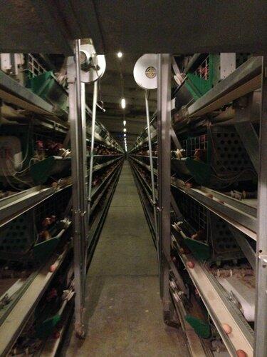 Как производится яйцо на птицефабрике.