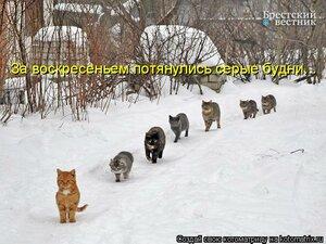 http://img-fotki.yandex.ru/get/9802/194408087.5/0_b120f_54125654_M.jpg