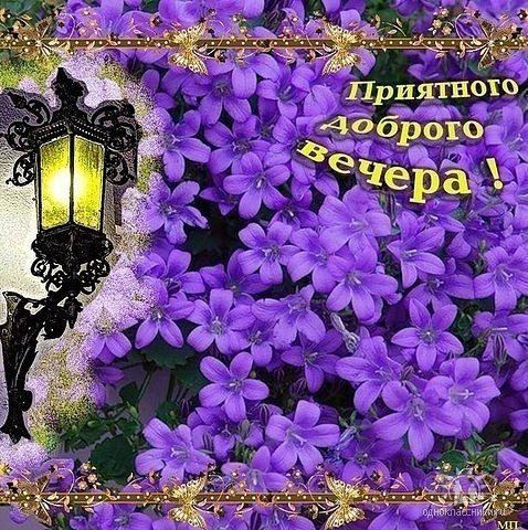 Приятного доброго вечера! Сиреневые цветы, фонарь