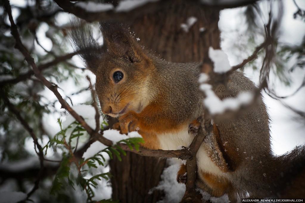 Зимний лес или белки правят миром