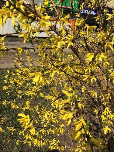 Весна кричит лету