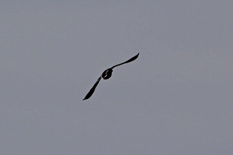 Полёт утки