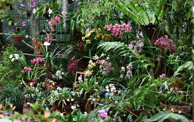 выставка орхидей.JPG