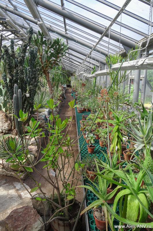 Здесь выращиваются различные кактусы и прочие суккуленты (не путайте с суккубами! :) ).