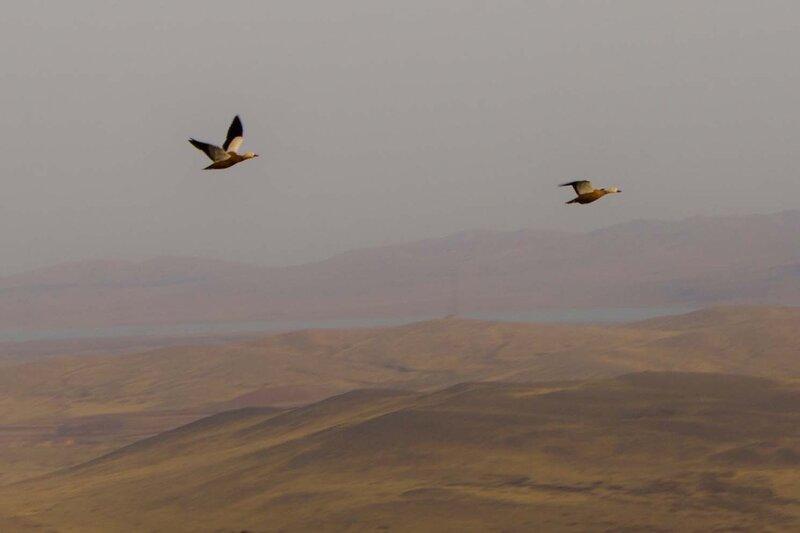 птицы, вулканическая зона Wulan Hada, Baiyinchagan volcano group