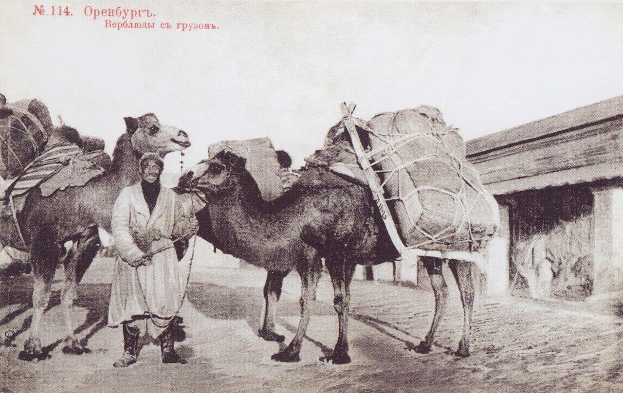 Верблюды с грузом