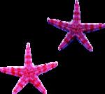 Starfish 3.png