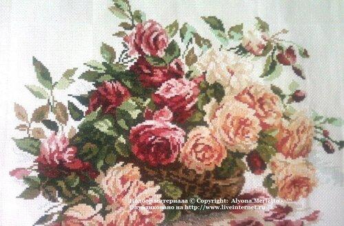 Роза - королева цветов .