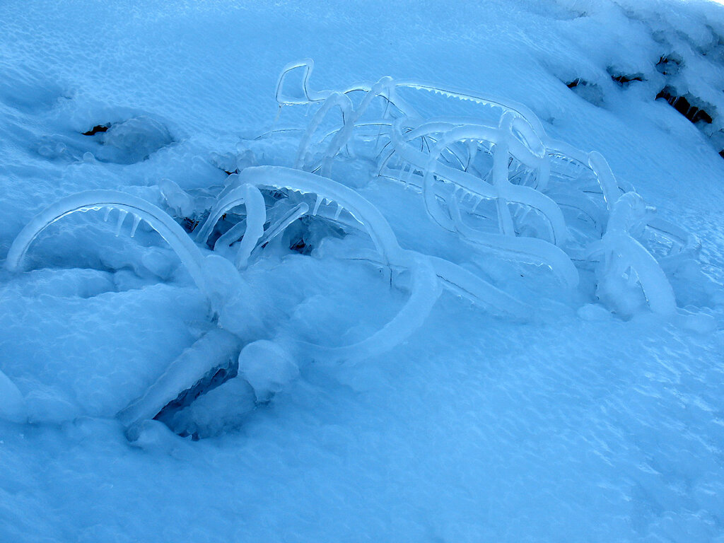 Ледяные черви