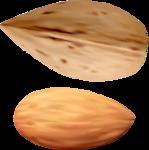 орехи-семечки (6).png