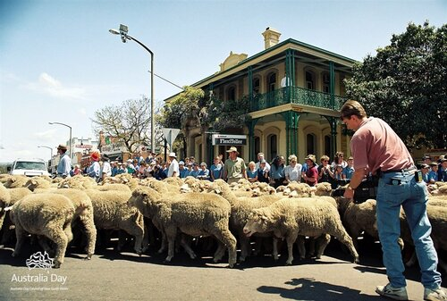 merino-sheep-in-camden.jpg